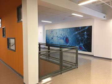 Hallway and artwork in biomedical science area